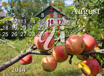 beautiful calendar for the August of 2014 year with apples