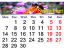 calendar for September of 2015 with bee on the pink flower