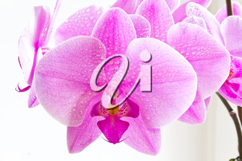 Photo of beautiful purple orchid on white background