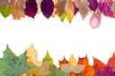 two side frame from pied autumn leaves isolated on white background