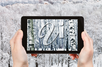 season concept - tourist photographs frozen birch forest in winter day on tablet pc