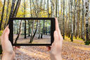 weather concept - photographer takes photo of birch trees in forest in autumn