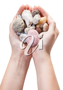 various natural pebble stones in handful isolated on white background