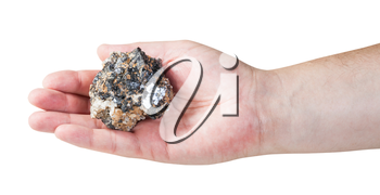 specimen of zinc and lead mineral ore (sphalerite with galena) on male palm isolated on white background