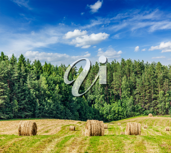 Agriculture background - Hay bales on field in summer