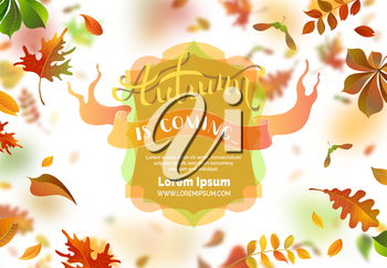 A lot of falling leaves on white background. Badge and ribbon. Blurred background. Oak, rowan, maple, chestnut and aspen leaves. Vector illustration.