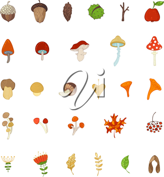 Mushrooms, acorns, fly agaric, chestnut, chanterelles, apple, rowan berries, flowers, autumn leaves and maple seeds isolated on white.
