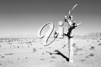 in iran blur old dead tree in the empty desert of persia lamp oil on branch