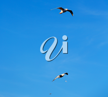 and free group of birds in oman the sky