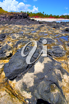 andilana beach seaweed in indian ocean madagascar mountain   sand isle  sky and rock