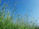 The mixture of different meadow grasses and flowers on the background of a blue sky