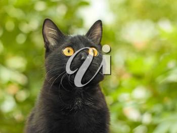 Portrait of funny young black cat on the background of green foliage