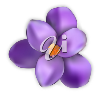 Naturalistic colorful spring flower. Opened and opened blue crocus. Vector Illustration. EPS10