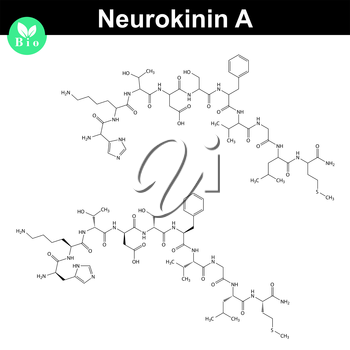 Neurokinin A molecular structure, 2d illustration, vector, eps 8