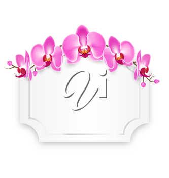 Pink Orchid Flowers with Celebration Frame Isolated on White Background