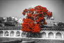 Red Fort is a fortress in the Indian city of Agra. India
