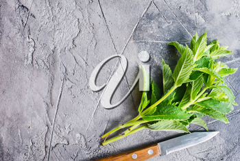 fresh mint on a table, stock photo