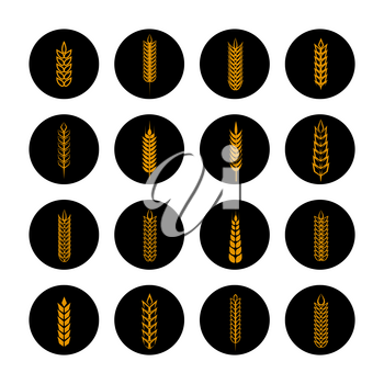 Harvest icons set. Vector golden grain ears on black rounds collection