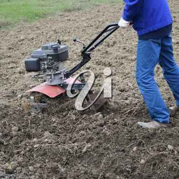 Planting potatoes under the walk-behind tractor. Man with motor-block in the garden.