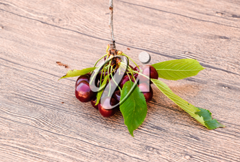 Berries of sweet cherry with a twig and leaves. Ripe red sweet cherry.