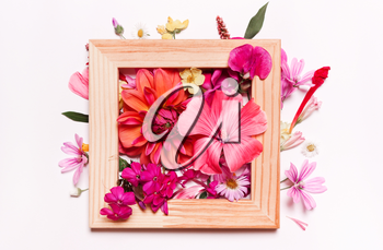 Coral pink flowers in frame. Pastel floral background. Top view, flat