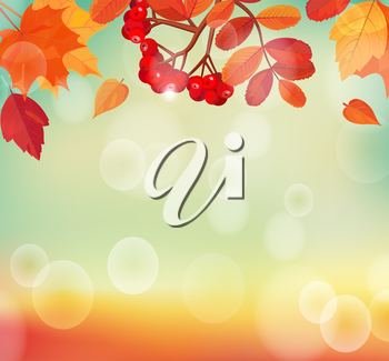 Autumn background with colorful leaves and rowan. EPS 10 vector illustration.