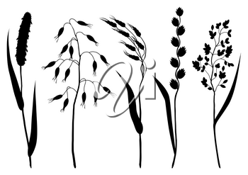 Set of herbs and cereal grass silhouettes. Floral collection with meadow plants.