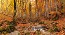 Canyon in autumn time. Natural panoramic composition