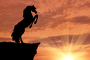 Silhouette of a horse at the edge of the mountains at sunset