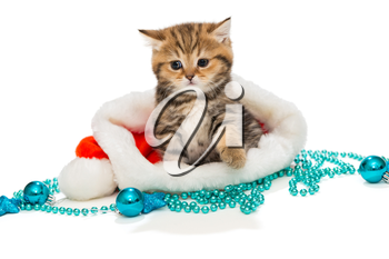 Kitten British marble color and Christmas hat on a white background