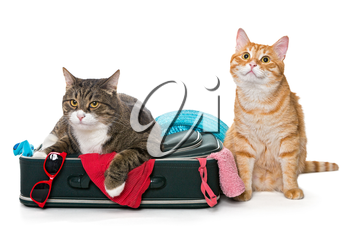 Two striped cat lying with a suitcase for a holiday trip. isolated on white