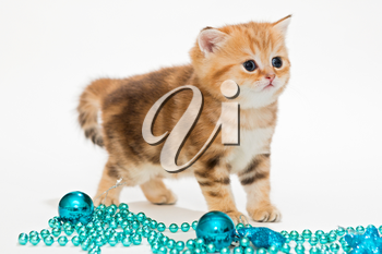 Red British kitten and Christmas toys blue color