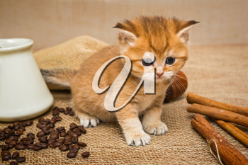 Little kitten Golden color and ingredients for making coffee