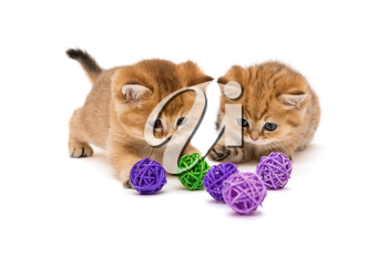 Two little kitten playing with balls isolated on a white background
