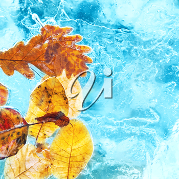 Fallen autumn leaves in the ice. Winter background